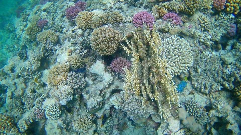 Snorkeling-Abu-dabbab